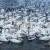 АЗ туристы лебеди
